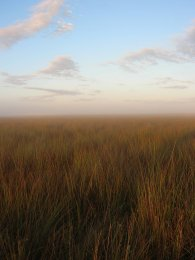 a vast expanse of tall grass