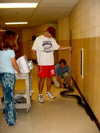 a group of students in a hallway, next to an enormous snake