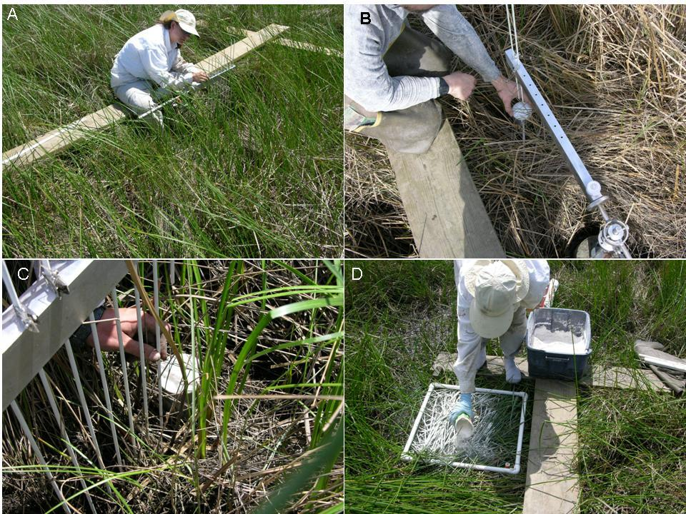 four images showing biology field work