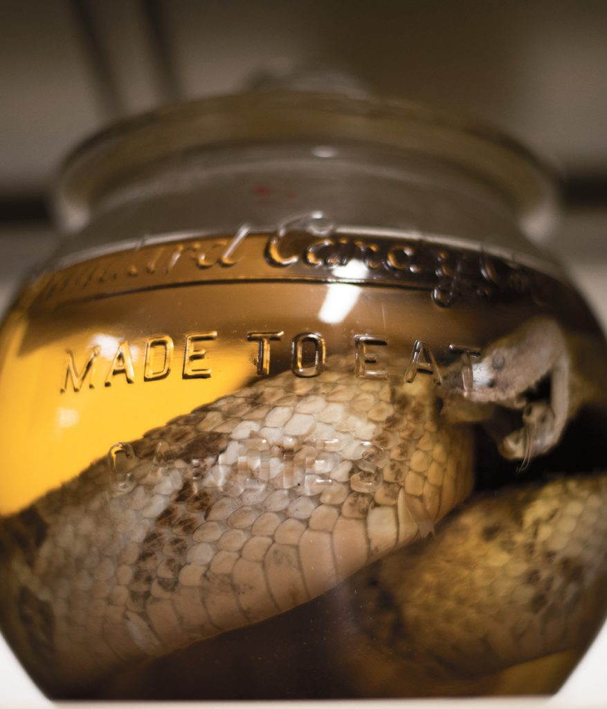 a snake, coiled in a specimen jar