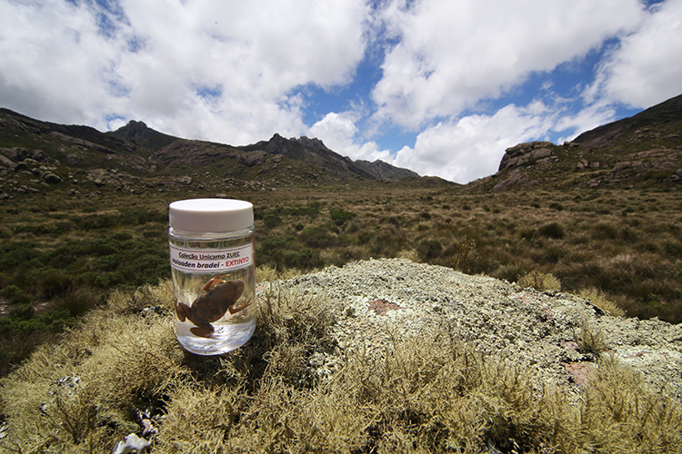 a small frog in a jar, which sits atop a lichen-covered rock