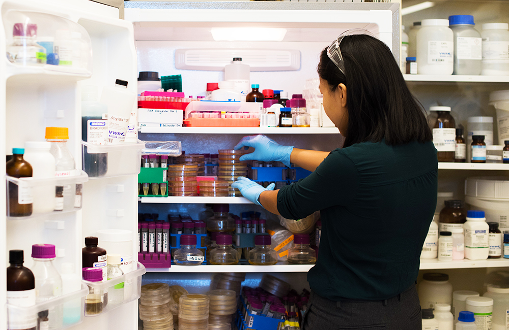 a lab technician removes samples from a refrigerator