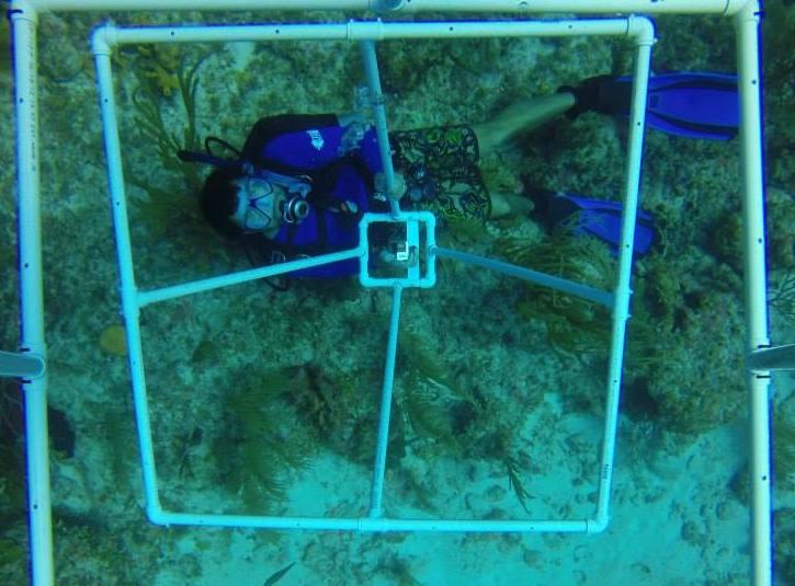 Dr. Kenneth Hoadley SCUBA diving