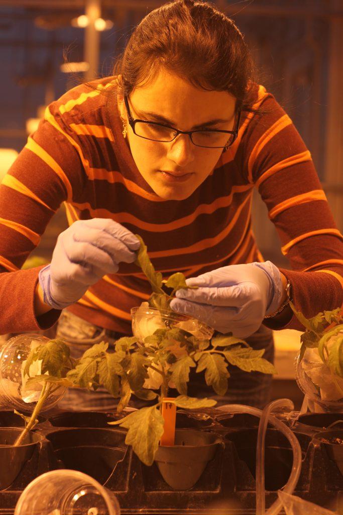 Dr. Monica Kersch-Becker working in the lab