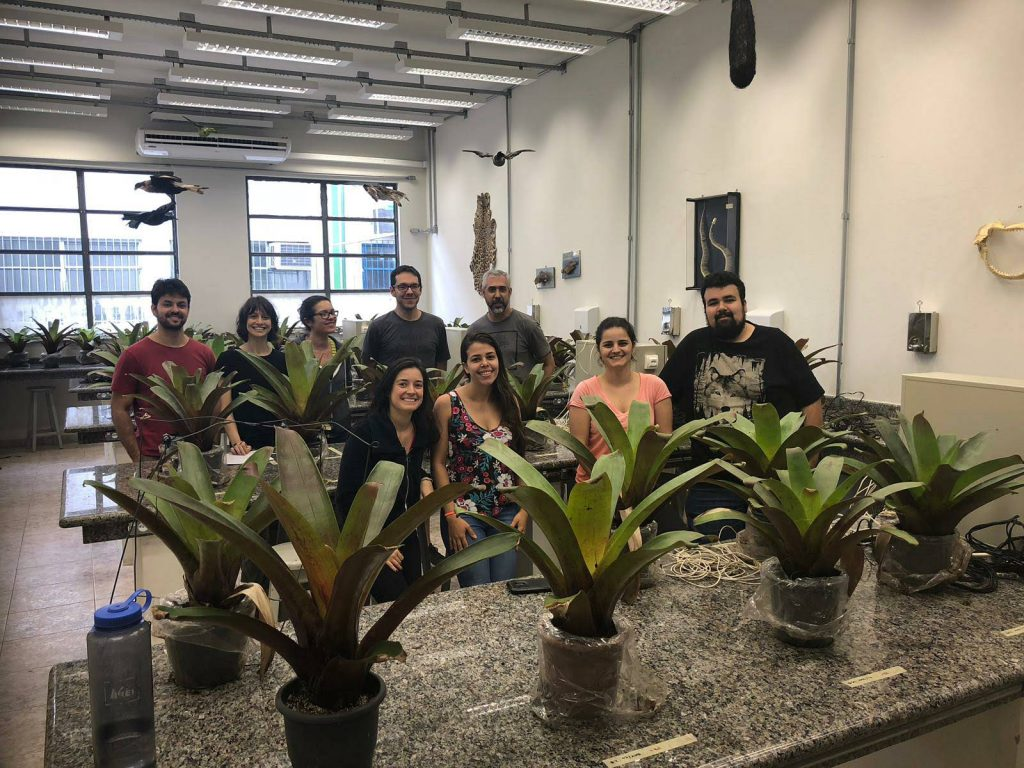 Bromeliads and the team in the lab