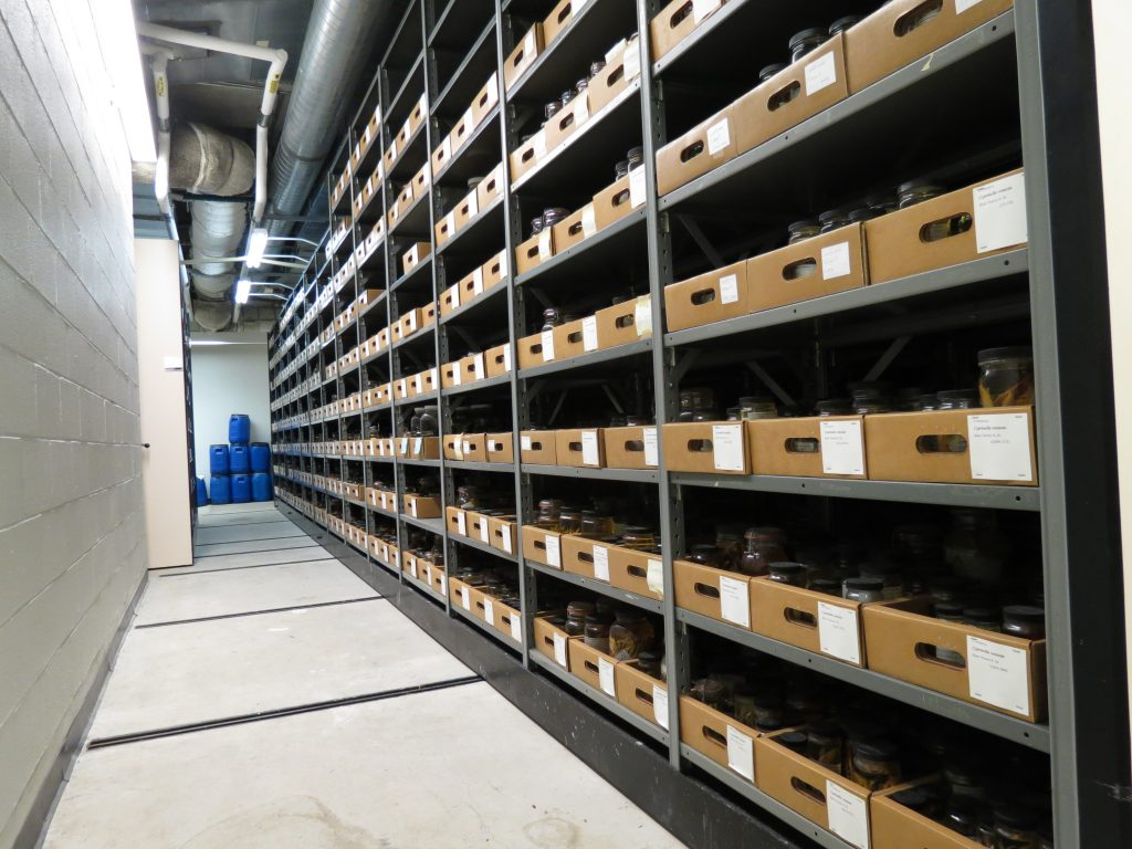 UAIC collection space