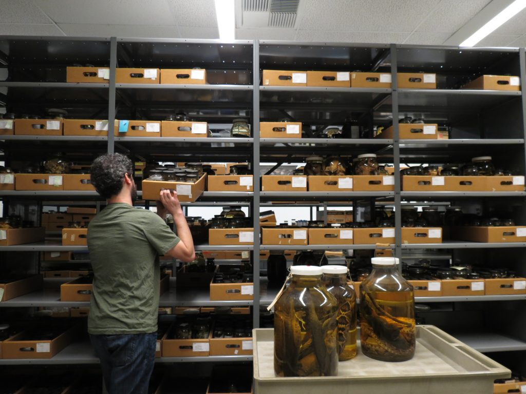 Herpetology Collection